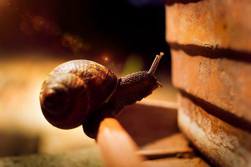 Snail, Horns, Animal, Antenna, Cute, Snails, Antennas