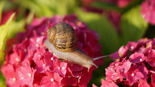 Snail, Shell, Crawl, Mollusk, Animal, Mucus, Probe