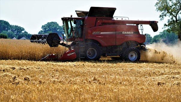 Harvest, Summer, Background, Pattern, Field