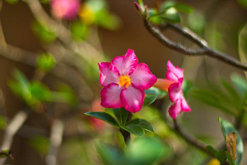 Invited To Visit, The Tropics, Nature, Flower, Bloom