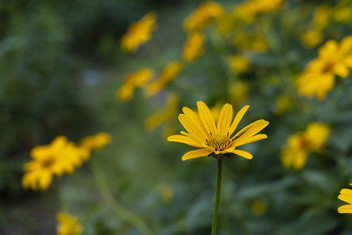Flower, Yellow, Green, Nature, Plant, Petals, Bloom