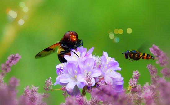 Trzmielówka Forest, Muchówka, Insects, Flowers