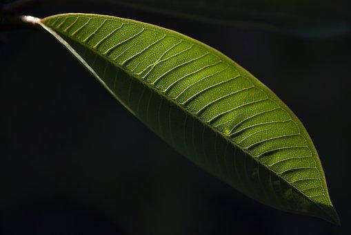 Foglia, Nature, Giardino, Pianta, Garden, Flora, Plant