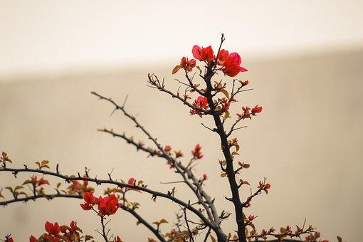 Flower, Nature, Red, Plant, Spring, Pink, Bloom, Garden