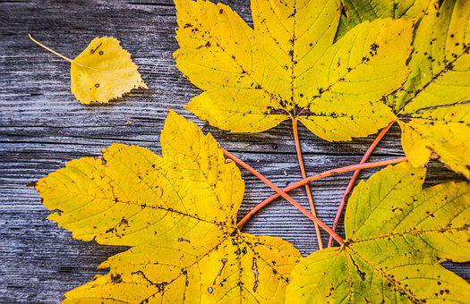 Leaves, Autumn, Yellow, Nature, Fall, Colorful, Maple