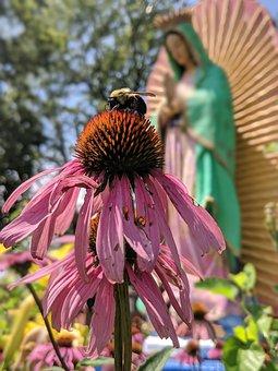 Flower, Blossom, Nectar, Hummingbird, Nature, Plant