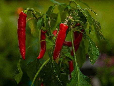 Spice, Pepperoni, Food, Fiery, Eat, Sharpness