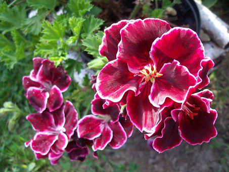 Flowers, Garden, Pink, Flower, Plant, Spring, Summer