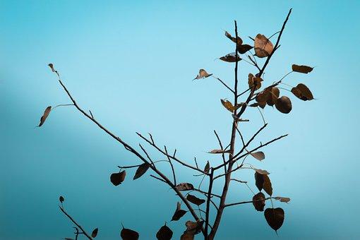 Plant, Sky, Blue, Gree, Nature, Dandelion, Spring