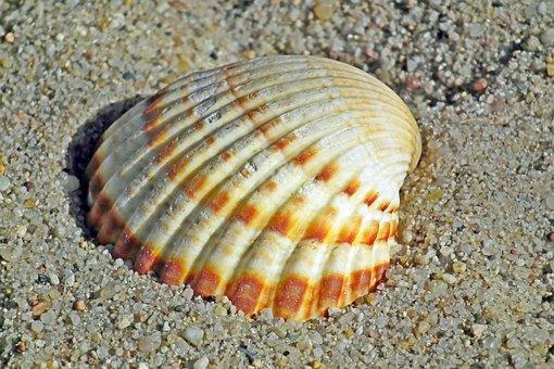 Seashell, Sand, Ocean, Nature, Summer, Cover, The Coast