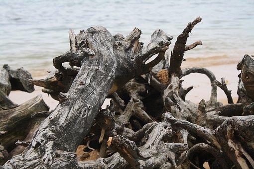 Driftwood, Scenic, Beach, Ocean, Nature, Seascape