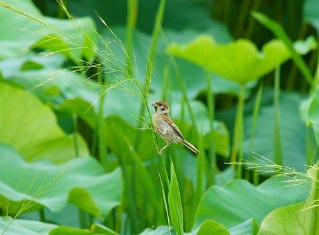 Bird, Sparrow, New, Animal, Bud, Birds, Cute, Lotus