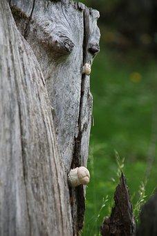 Nature, Tree, Fungus, Trunk, Mushrooms, Trees