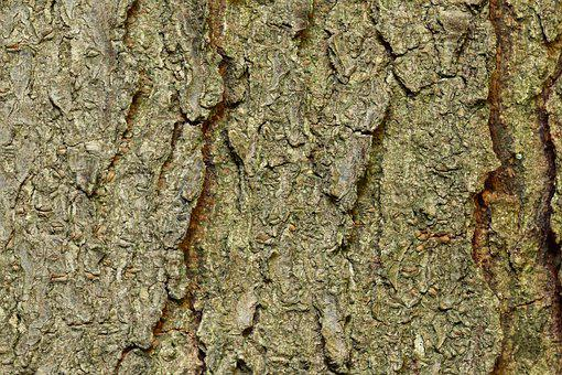 Bark, Tree Bark, Honey Locust, Structure, Log, Tree