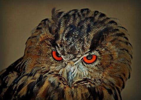 Owl, Bird, Animal, Animal World, Nature, Plumage, Bill