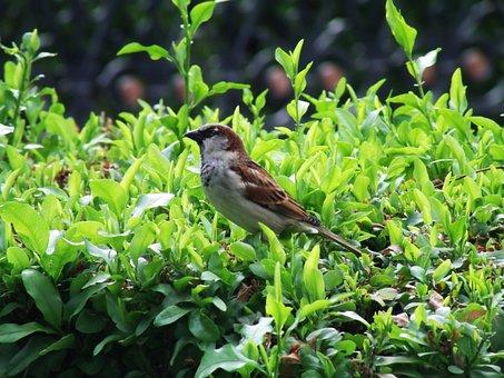 Bird, Birds In Focus, Bird Focused, Ave, Garden, Exotic