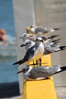 Birds, Seagulls, More, Seagull, Animals, Sea, Ave
