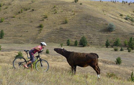 Cyclist, Ukraine, Bull, Bike, Ride, Cycling, Tourism