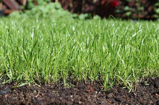 Earth, Grass, Soil, Plants