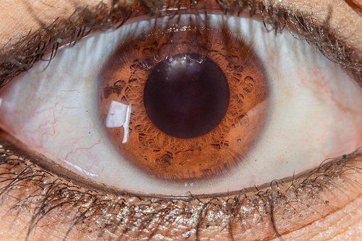 Macro, Eyes, Closeup, Nature, Vision, Skin, Eyelashes