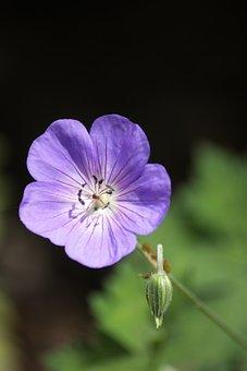 Flower, Purple Flower, Spring, Floral, Bud, Petals