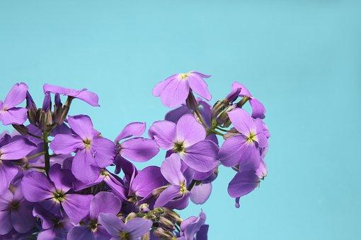 Flowers, Bouquet, Purple, Blue, Vase, Background