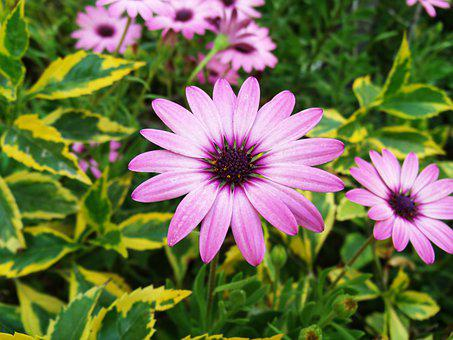 Flower, Flowers, Spring, Summer, Nature, Plant, Beauty