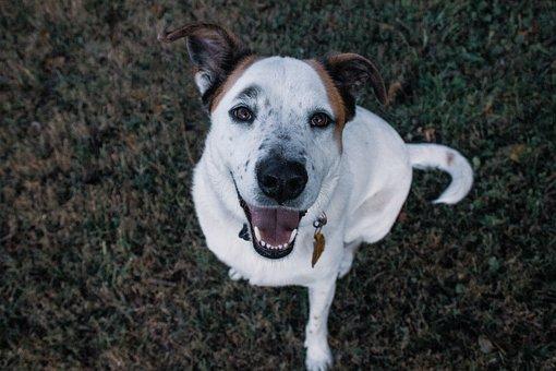 Dog, Happy, Fun, Puppy, Cute, Animal, Canine, Funny