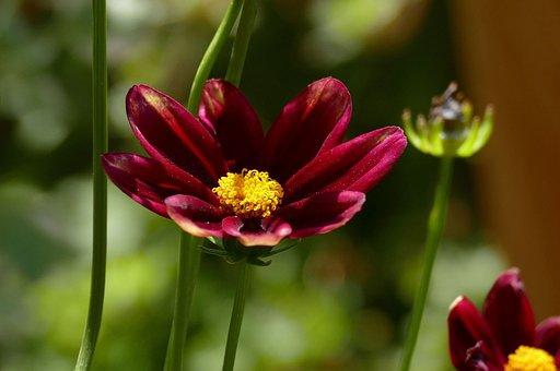 Red Eye Girl, Garden, Flower, Nature, Blossom, Bloom