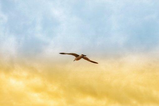Gull, Sky, Cloud, Morning, Bird, Freedom, Nature