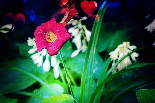 Hearts, Lilly, Flower, Romance, Romantic, Plant