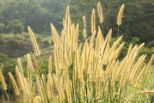 Afternoon, Natural, Grass
