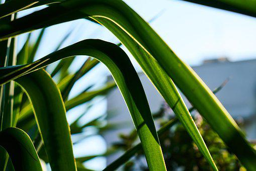 Plant, Leaves, Spring, Nature, Green, Garden, Natural