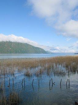 France, Aix Les Bains, Lake, Nature, Water, Green
