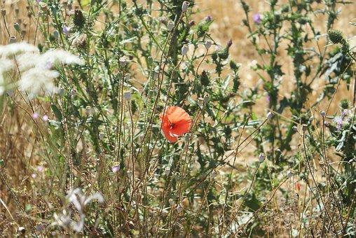 Field, Summer, Nature, Belgium, Promenade, July