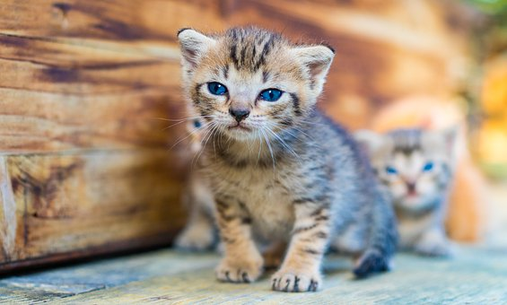 Cat, Puppy, Kitten, Pet, Animals, Cute, Outdoor
