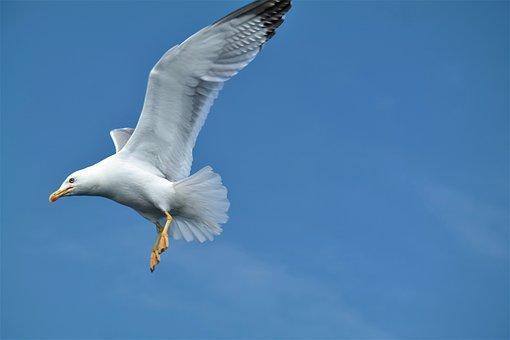 Seagull, Bird, Flying, Wing, Freedom, Seevogel, Sky