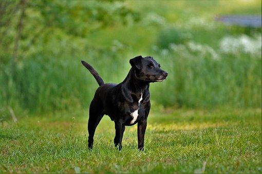 Terrier, Dog, Black, Animals, Pet, Summer