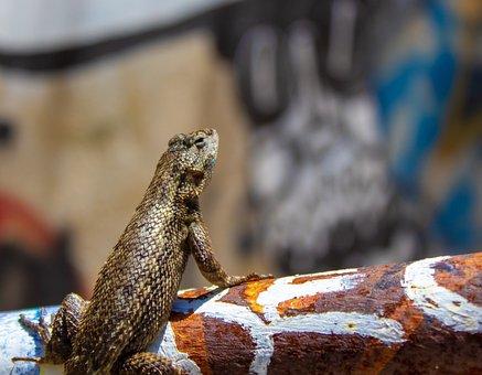 Lizard, Graffiti, Wall, Animal, Urban, Predator, Small