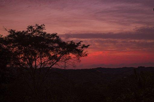 Sunset, Vegetation, Colors, Red, Silhouette, Twilight