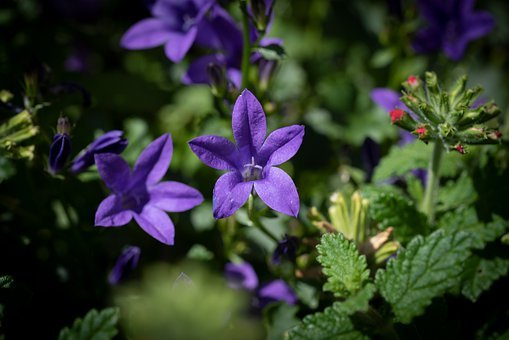 Flowers, Blue, Violet, Nature, Garden, Summer