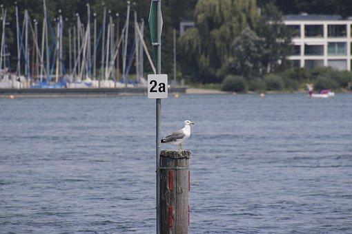 Seagull, Animal, Port, Bird, Nature, Water, Freedom