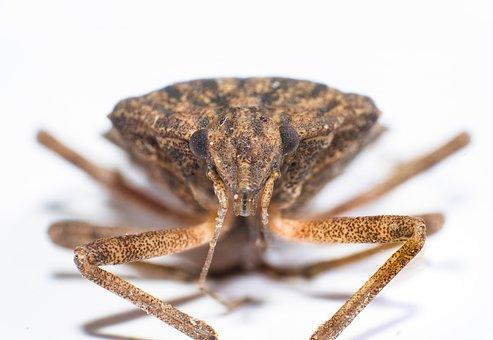Macro, Insects, Animal, Yellow, Eyes, Bug, Wing