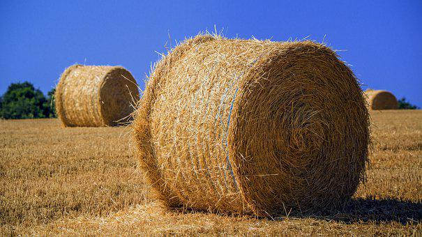 Agriculture, Harvest, Field, Cultivation, Cereals