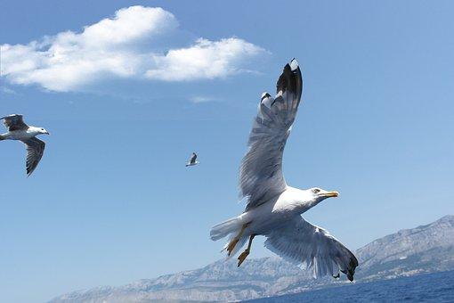 Fly, Bird, Seagull, Sky, Wing, Freedom, Birds, Animal