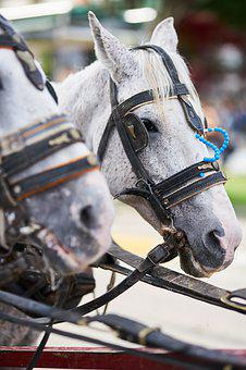 The Horses Are, Phaeton, White, Horse, Car, Animal