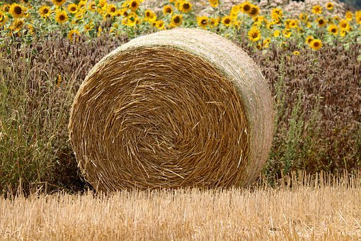 Straw Bales, Straw, Cereals, Harvest, Agriculture