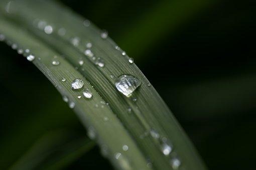 Leaf, Drop Of Water, Dewdrop, Rain, Raindrop, Wet