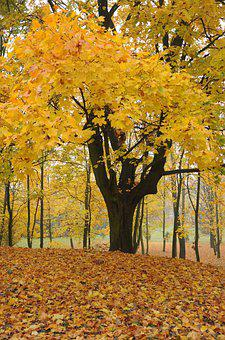Tree, Autumn, Fall, Forest, Park, Colorful