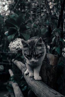 Cat, Flower, Flowers, Kitten, Animals, Fantasy
